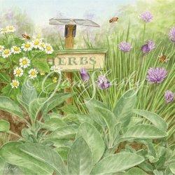 js-d269-herb-garden